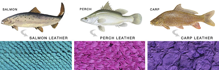 Fish Leather Species